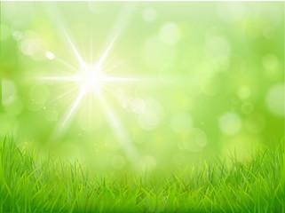 Wiese Sonnenlicht - Bokeh