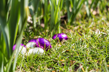 Easter eggs in grass, sunny weather