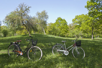 Bicycles on the meadow