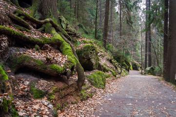 Der Amselgrund in der Sächsischen Schweiz bei Rathen