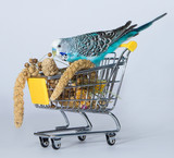 Wellensittich beim Einkaufen