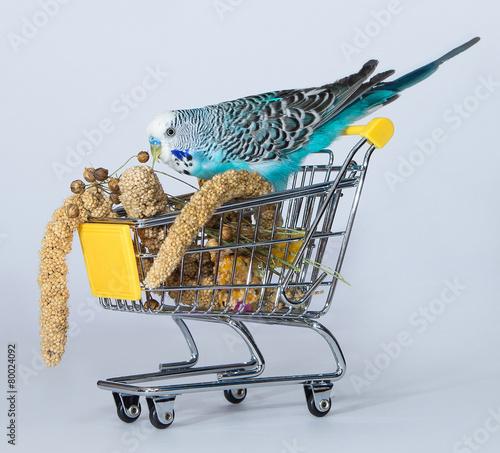 Foto op Aluminium Papegaai Wellensittich beim Einkaufen