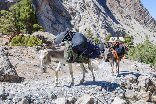 Fotobehang Dragen Donkey caravan in mountains of Tajikistan