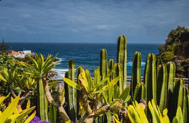 Frühling in Madeira