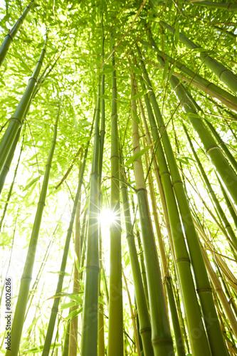Foto Spatwand Bamboe hohe Bambusstämme