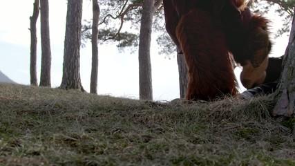 Hoofed creature walking over ground