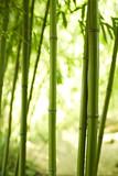 drei Bambushalme
