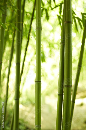 Canvas Bamboe drei Bambushalme