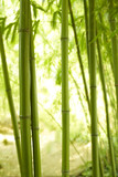 Bambushalme 2