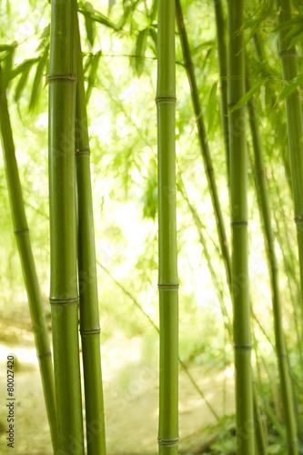 Papiers peints Bambou Bambushalme 2