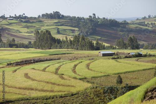 Fotobehang farms in Ethiopian highlands