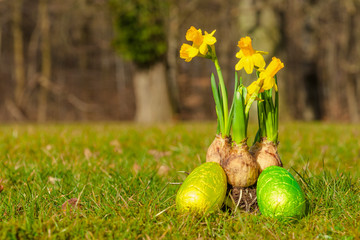 Daffodil onions with easter eggs