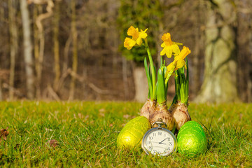 Easter time with eggs and daffodils