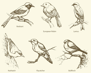 Vector set of birds: Bullfinch, Redstart, Nuthatch, Flycatcher,