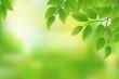Fresh green leaves background, vector illustration
