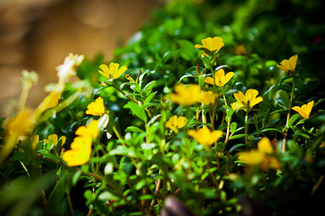 small yellow flowers background