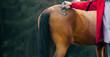 Obrazy na płótnie, fototapety, zdjęcia, fotoobrazy drukowane : Veterinary makes marking on a horse
