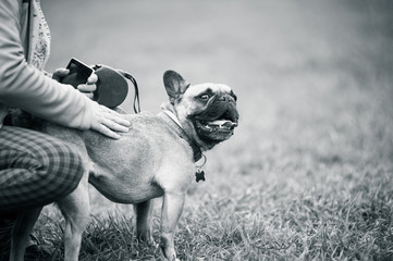 French buldog with owner