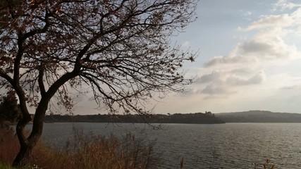 Tree and view of Bracciano lake - Anguillara Sabazia