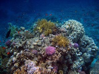 Colorful coral reef are on the Red Sea