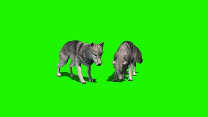 wolves eat - with and without shadow 5
