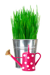 Fresh green grass in small metal bucket and water can isolated o