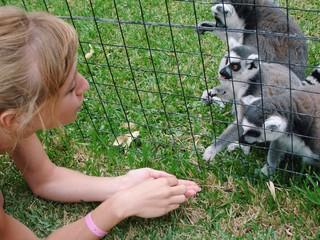 lemur's family