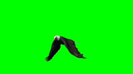 eagle flying - 2 diffrent views - green screen
