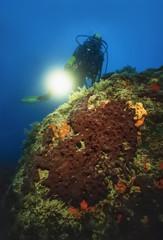 Italy, Mediterranean Sea, diver and a big sponge - FILM SCAN