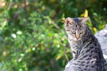 Tabby kitten in the garden. Selective focus and beautiful bokeh.