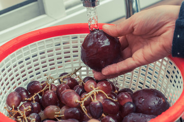 Plums and Grapes being washed in a kitchen sink
