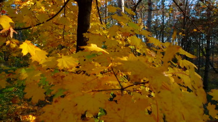 Bright Colors In Autumn Deciduous Tree Forest