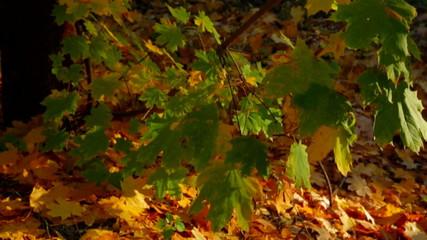 Multi Colored Autumn Trees