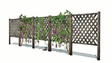 fence with vine tendrils 4
