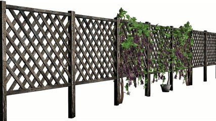 fence with vine tendrils - laterally without shadow