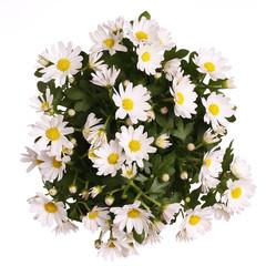 Chamomile Flowers Bouquet
