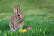 Cute bunny and Easter eggs in the grass