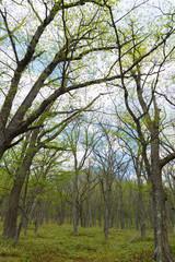 奥日光 光徳牧場の森