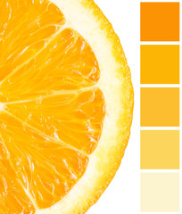 Color Palette Of Orange Slice Isolated