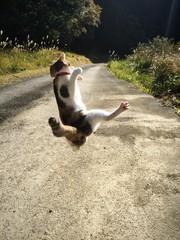 猫の大ジャンプ