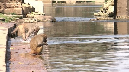 Monkeys are eating Near a River.