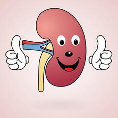 Healthy Cartoon Kidney