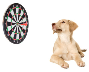 Puppy and darts on a white background isolated