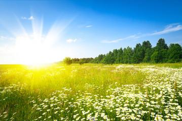 Sunrise on summer green field