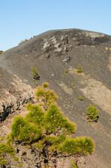 Volcano San Antonio, Fuencaliente.