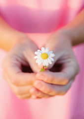 Woman hands holding a beautiful daisy