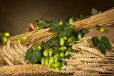 hop cones barley and wheat