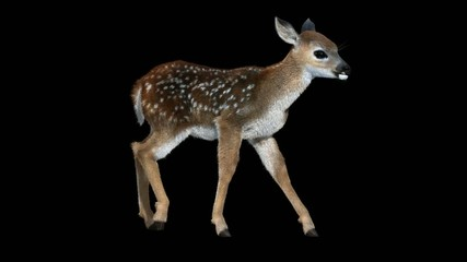 Fawn Walk Cycle animation with alpha