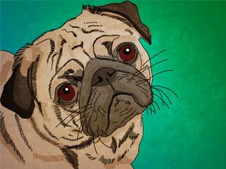 dog pug. graphics