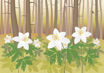 Anemone in a forest